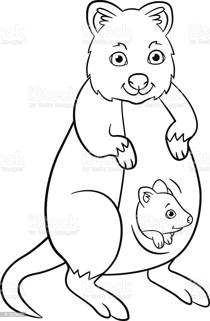 Coloring Pages. Mother Quokka With Her Little Cute Baby. Royalty Free Coloring  Pages