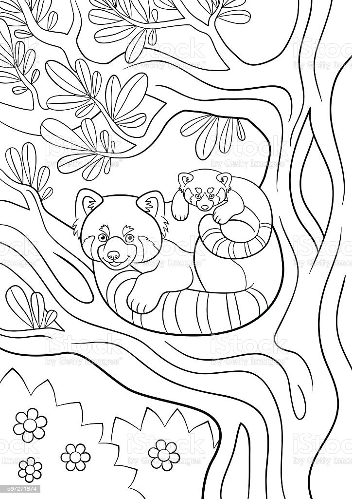 coloring pages mother red panda with her cute baby royalty free stock vector