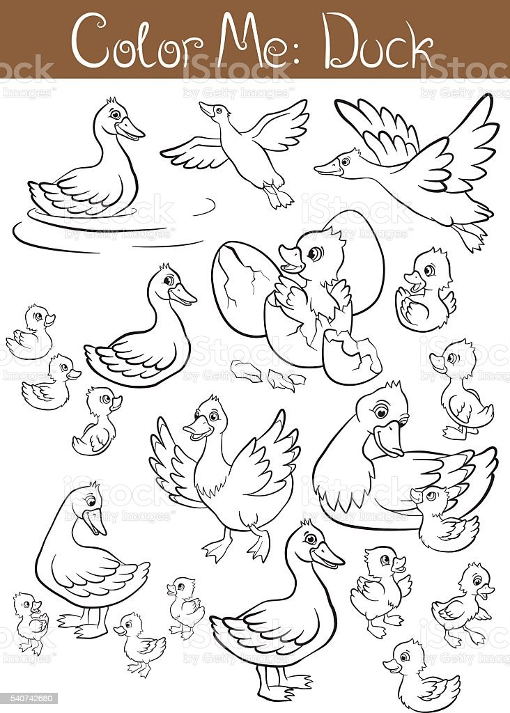 Coloring Pages The Set Of Ducks And Ducklings Stock Illustration Download Image Now Istock