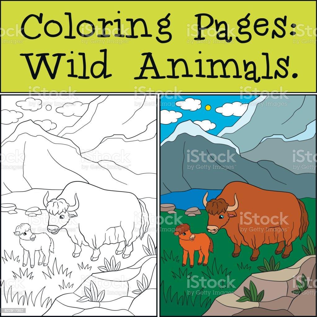 Ilustración De Dibujos Para Colorear Animales Salvajes Hermoso Yak