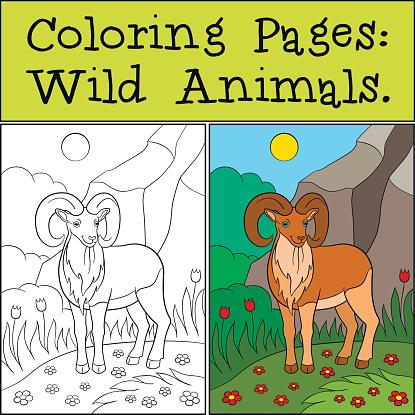 Ilustración De Dibujos Para Colorear Animales Salvajes Urial Hermosa Linda Sonrisa Y Más Vectores Libres De Derechos De Alegre