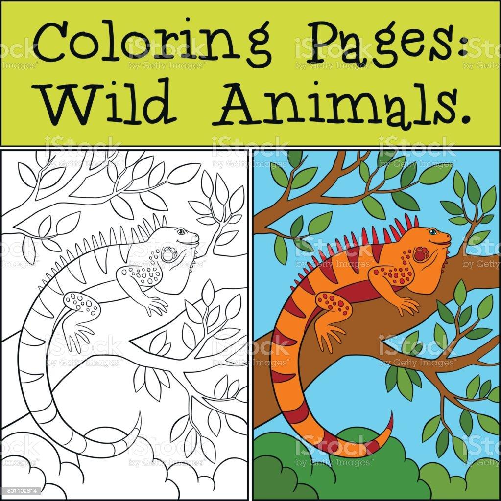 Ilustración De Dibujos Para Colorear Animales Salvajes Iguana Azul