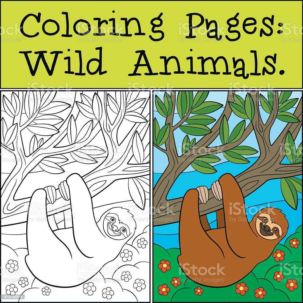 Coloring Pages Wild Animals Cute Lazy Sloth Royalty Free Stock Vector Art