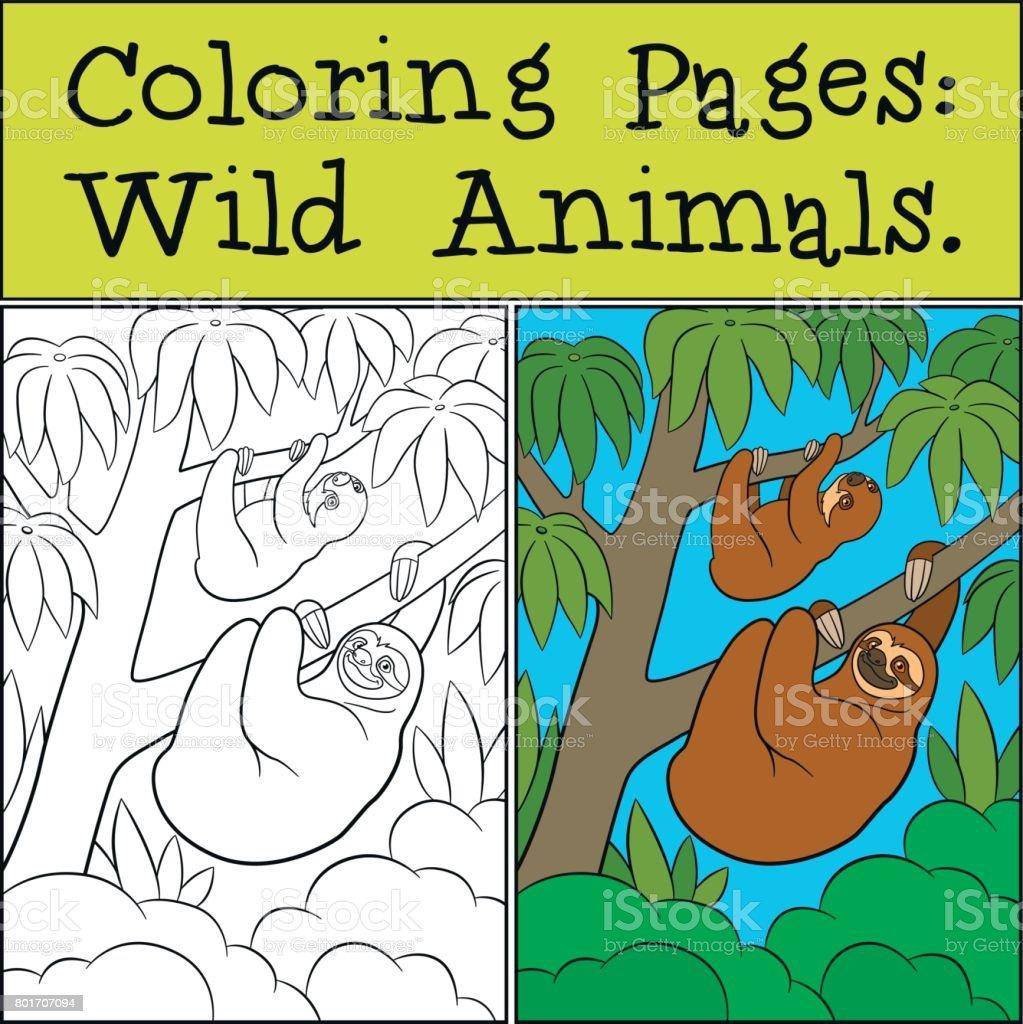 Dibujos Para Colorear Animales Salvajes Lindo Perezoso Perezoso ...
