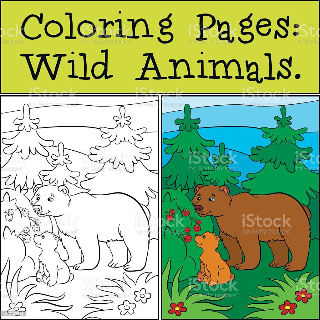 Coloring Pages Wild Animals Daddy Bear With His Little Baby Stock ...