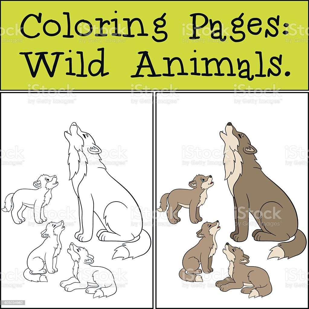 Coloring Pages Wild Animals Father Wolf Howls With His Babies Royalty Free