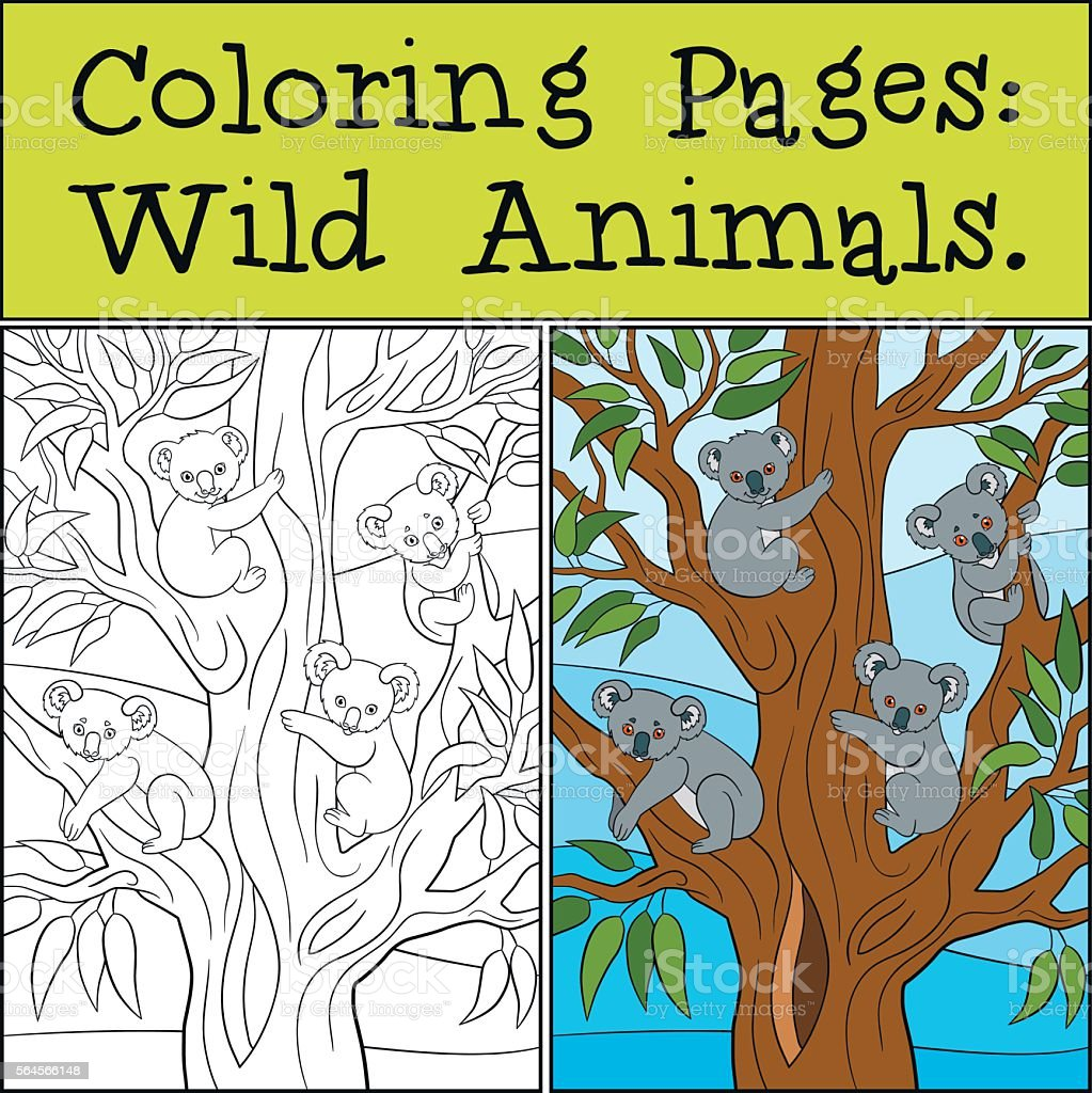 Coloring Pages: Wild Animals. Four little cute koala bebies smil vector art illustration
