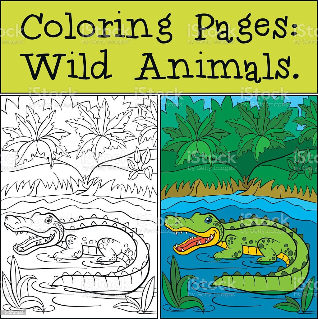 Coloring Pages Wild Animals Little Cute Alligator Stock Vector Art ...