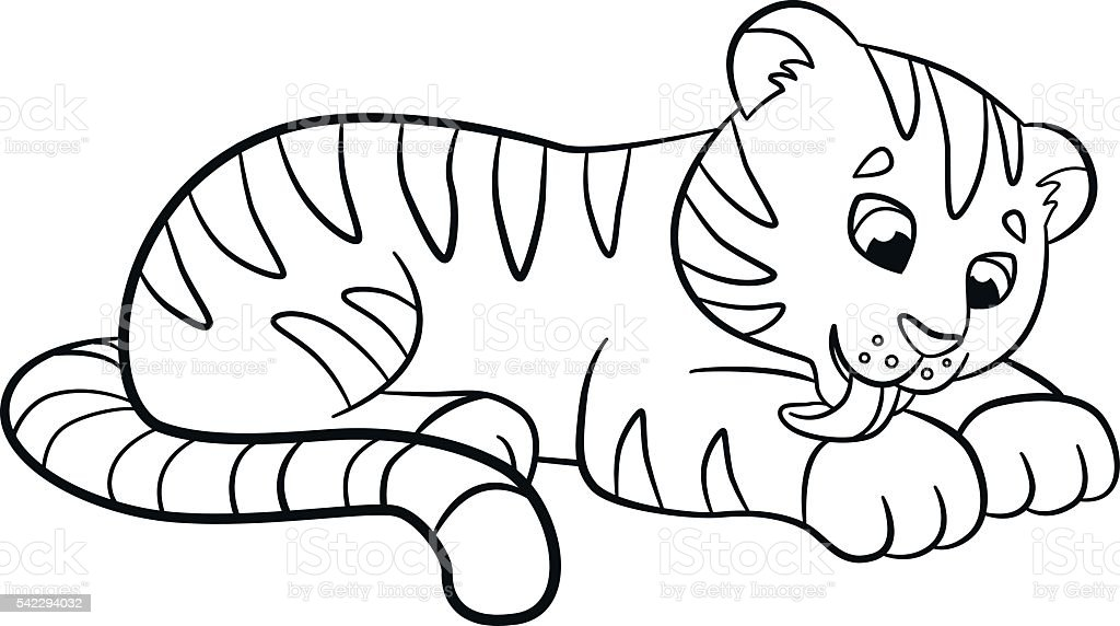 Coloring Pages Wild Animals Little Cute Baby Tiger Cleans Himself Royalty Free
