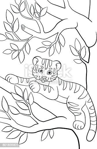 ᐈ Imagen De Dibujos Para Colorear Animales Salvajes
