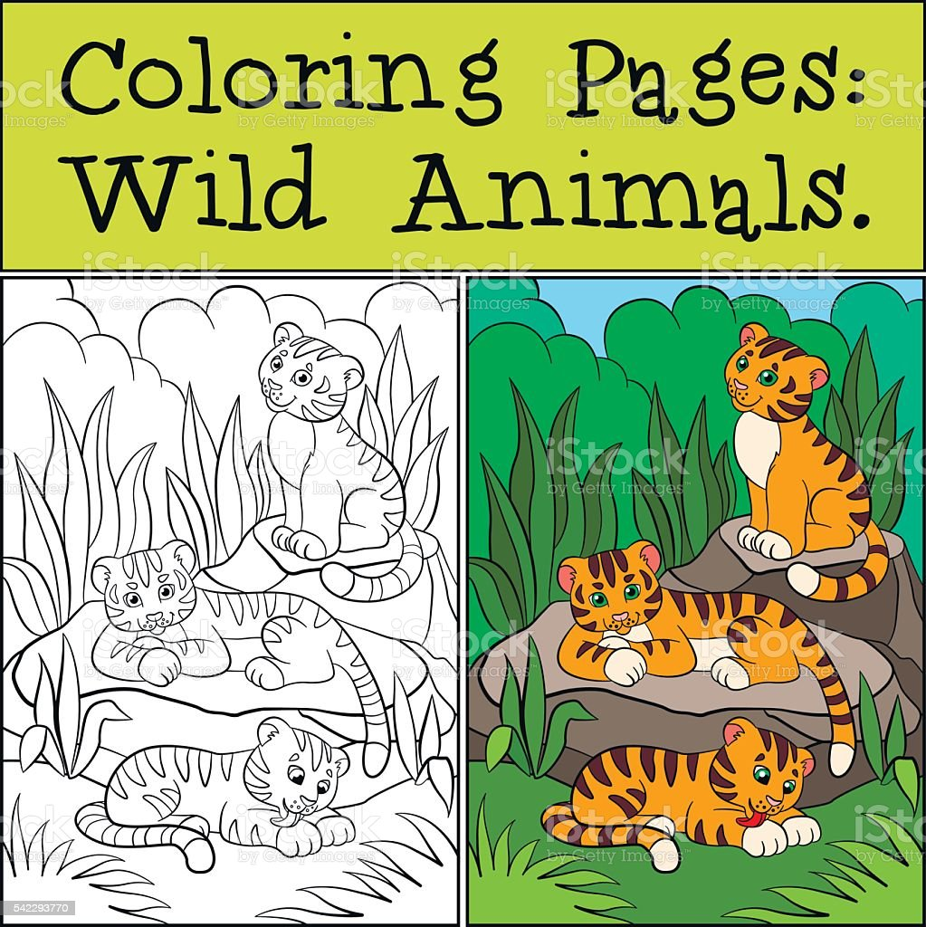 Coloring Pages Wild Animals Little Cute Baby Tigers Stock Vector Art ...