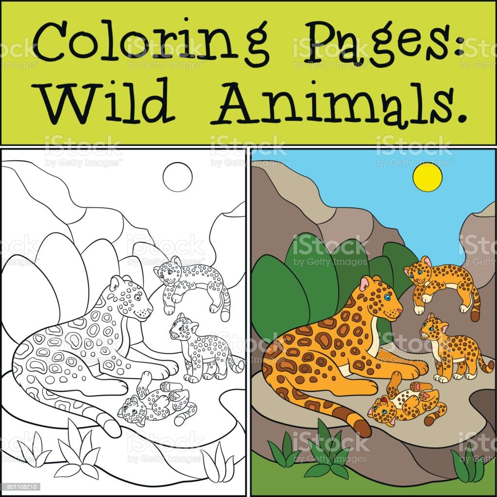 Coloring Pages Wild Animals Little Cute Jaguar Smiles Stock Vector ...