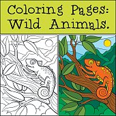 Coloring Pages: Wild Animals. Little cute orange chameleon
