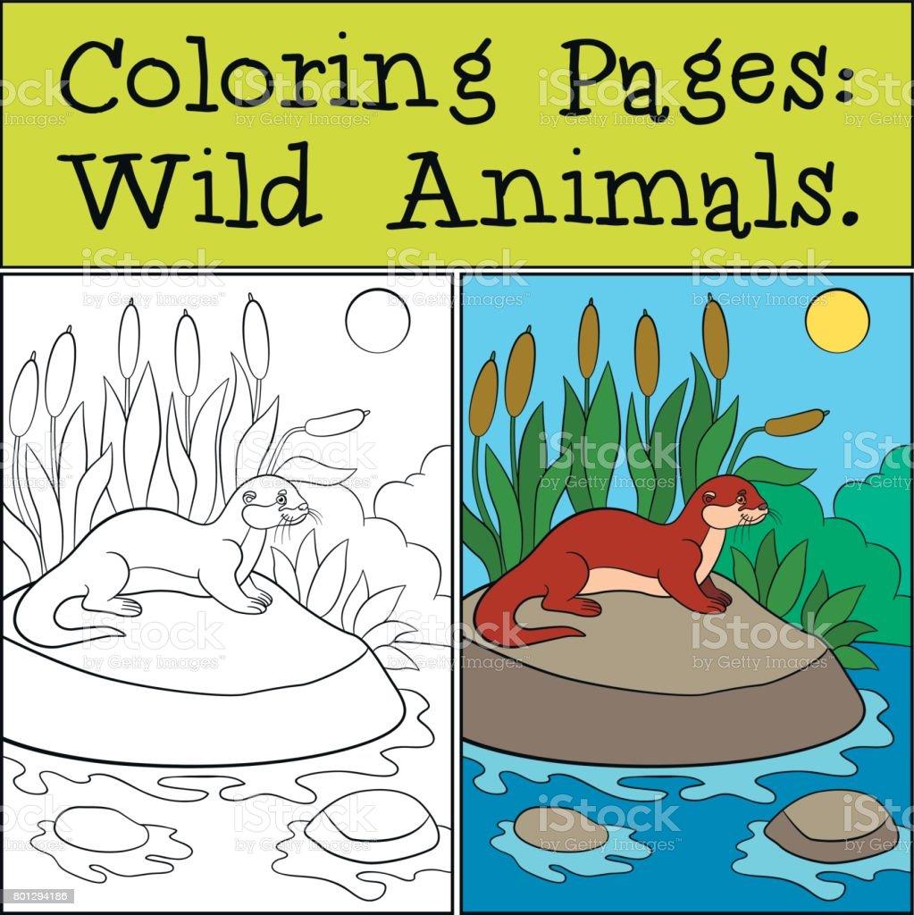 Boyama Sayfaları Vahşi Hayvanlar Küçük şirin Su Samuru Gülümsüyor