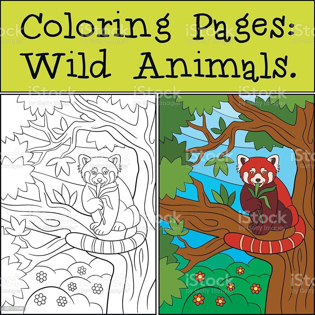Coloring Pages: Wild Animals. Little cute red panda eats leaves. Lizenzfreies coloring pages wild animals little cute red panda eats leaves stock vektor art und mehr bilder von aktivitäten und sport