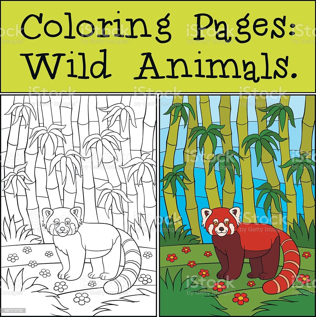 Coloring Pages: Wild Animals. Little cute red panda smiles. royalty-free coloring pages wild animals little cute red panda smiles stock vector art & more images of activity