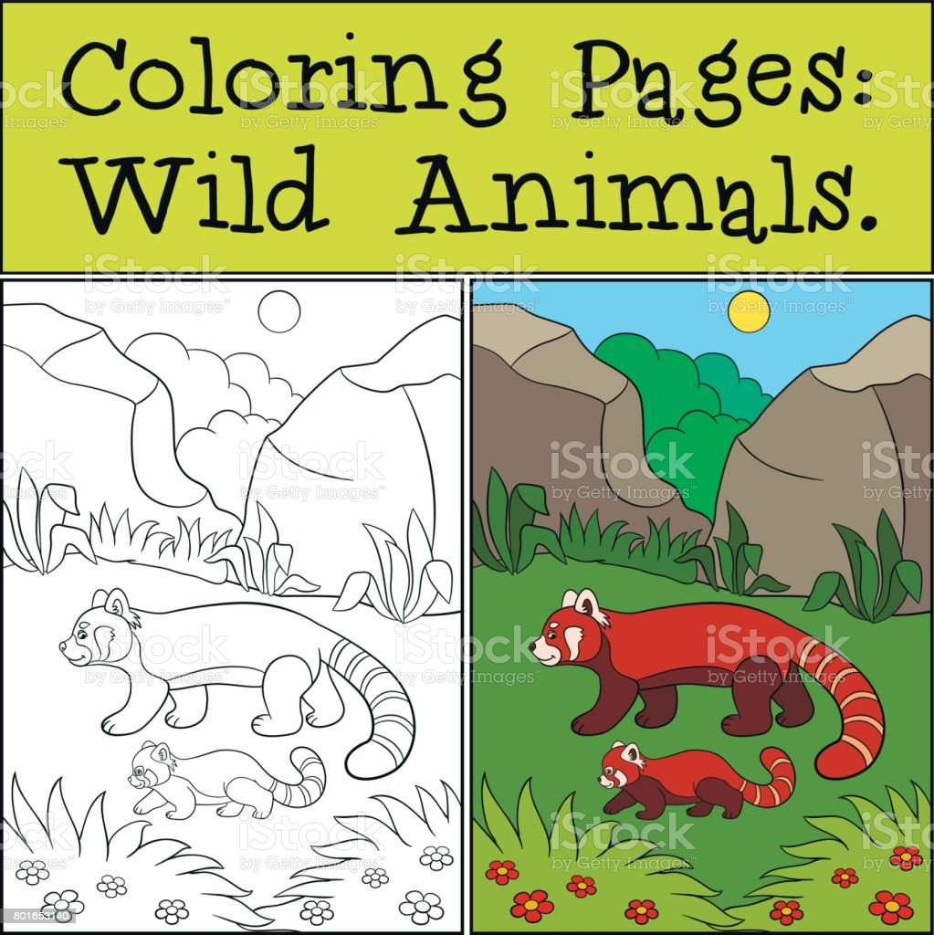 Coloring Pages Wild Animals Little Cute Red Panda Smiles Stock