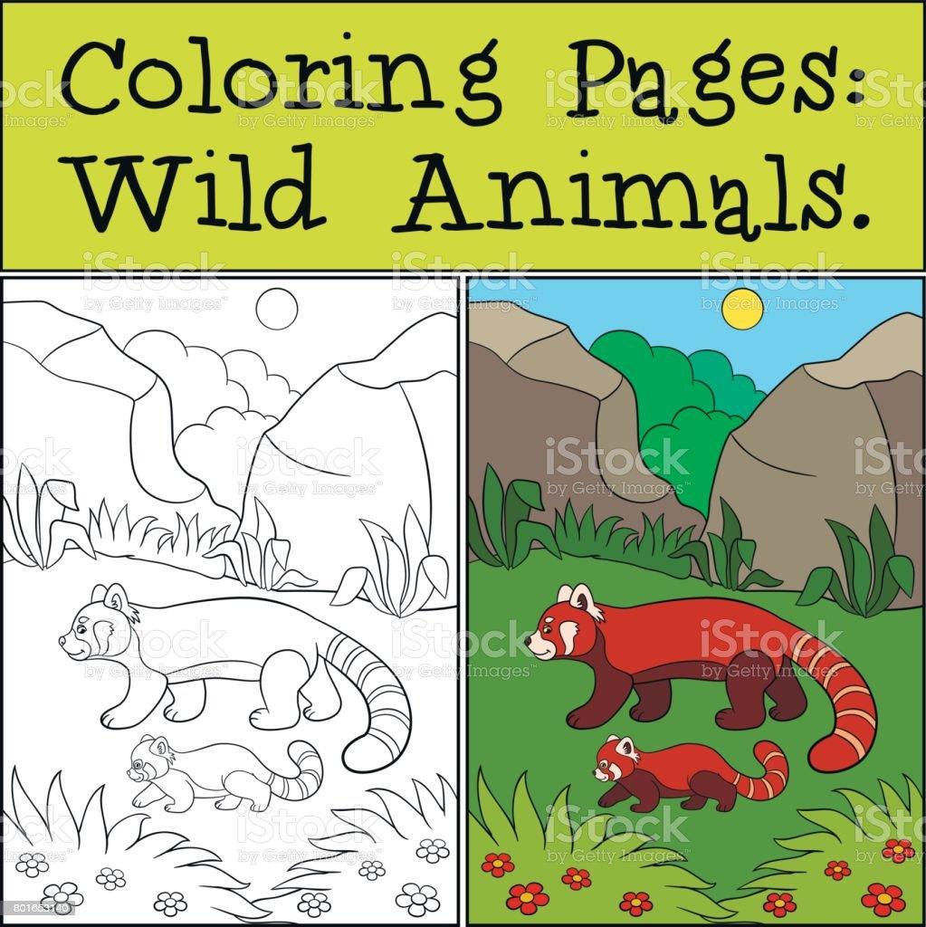 Dibujos Para Colorear Animales Salvajes Poco De Lindo Panda Rojo De ...
