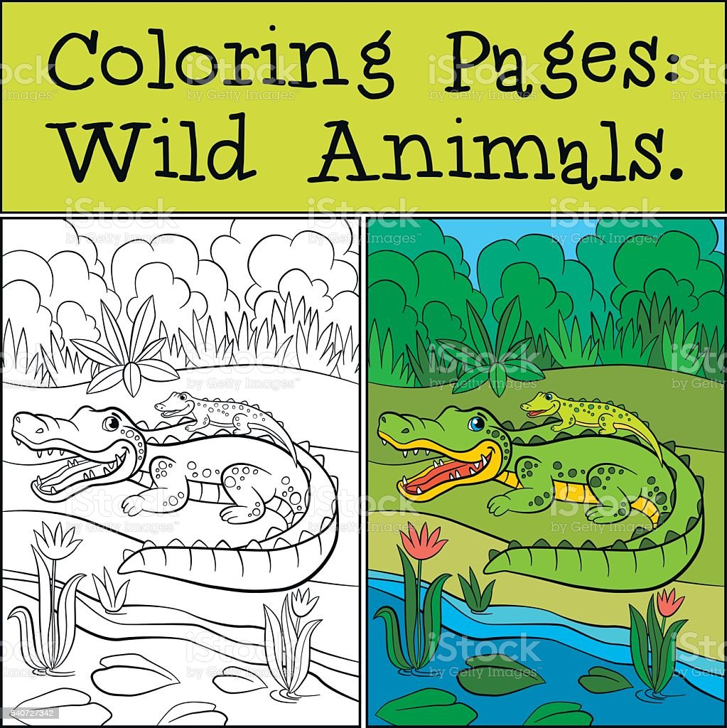 Coloring Pages Wild Animals Mother Alligator With Her Baby Stock ...
