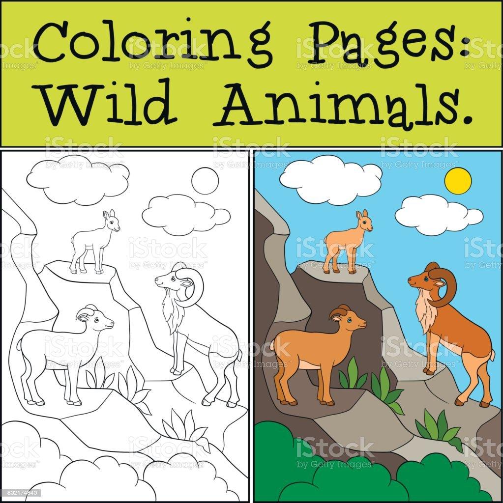 Dibujos Para Colorear Animales Salvajes Urial De Madre Padre Y Bebé ...
