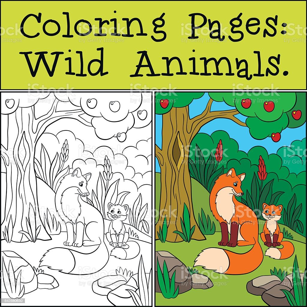 Coloring Pages Wild Animals Mother Fox With Baby Stock Vector Art ...
