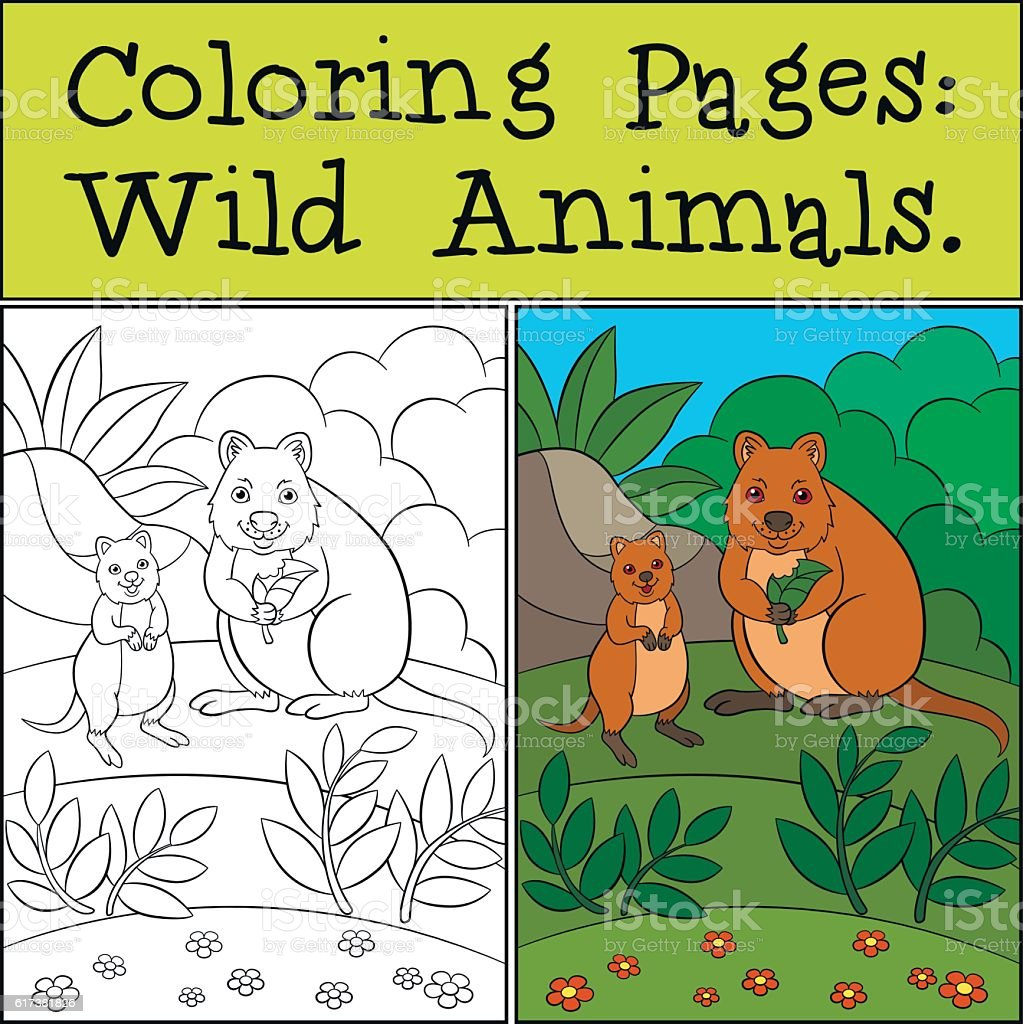Coloring Pages Wild Animals Mother Quokka With Baby Stock Illustration Download Image Now Istock