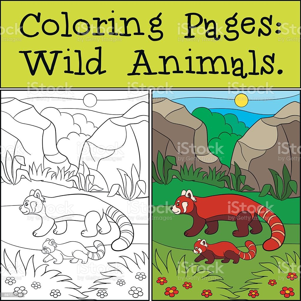 Coloring Pages: Wild Animals. Mother red panda walks with baby. Lizenzfreies coloring pages wild animals mother red panda walks with baby stock vektor art und mehr bilder von aktivitäten und sport