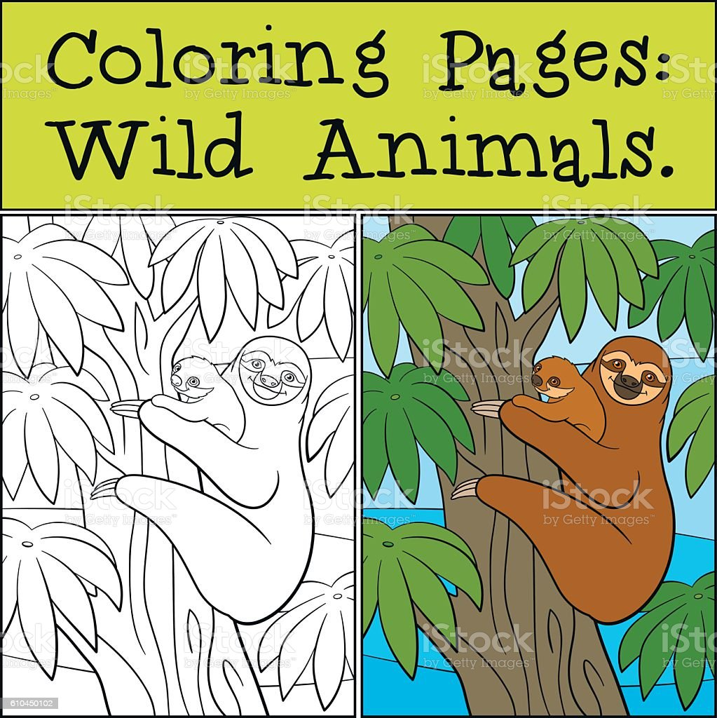 Coloring Pages Wild Animals Mother Sloth With Her Cute Baby Stock ...