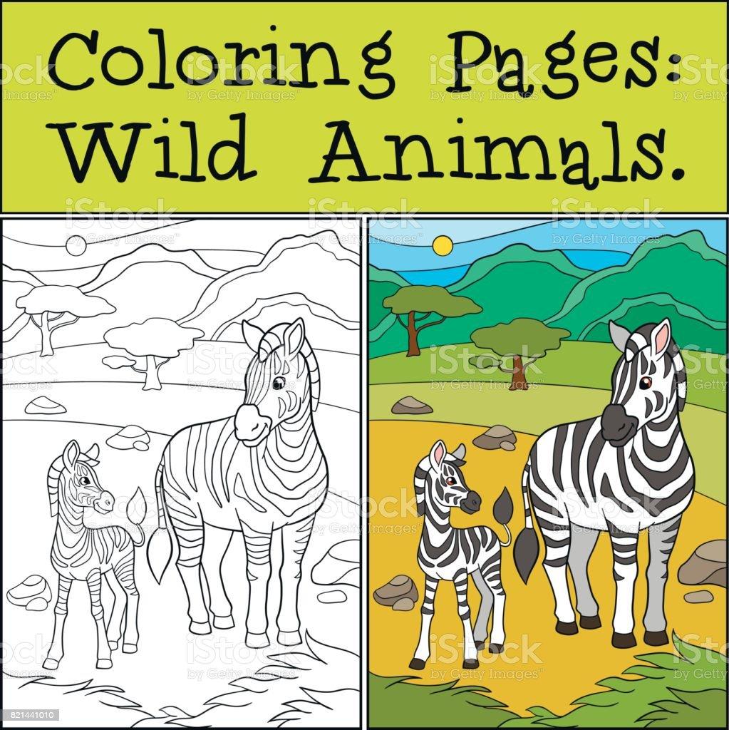Ilustración De Dibujos Para Colorear Animales Salvajes Mpther Cebra