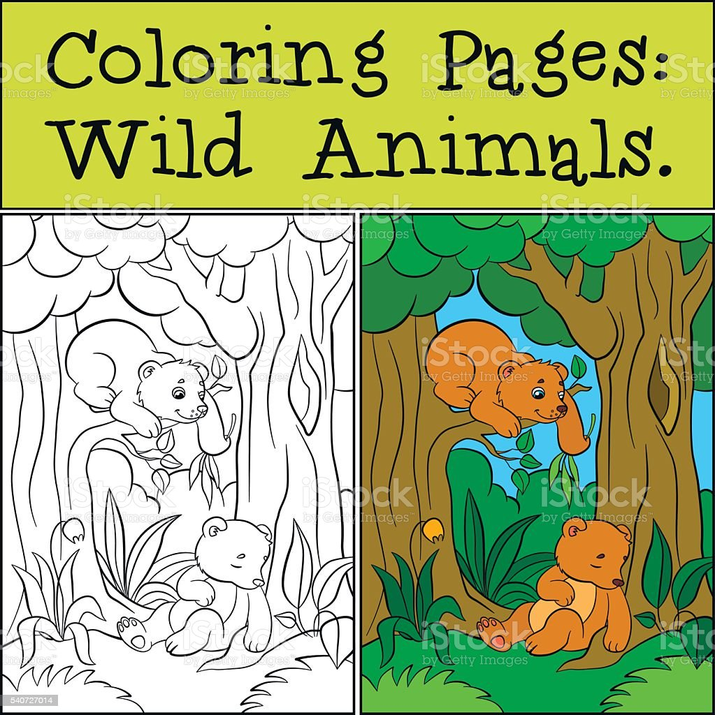 Coloring Pages Wild Animals Two Little Cute Baby Bears stock vector ...