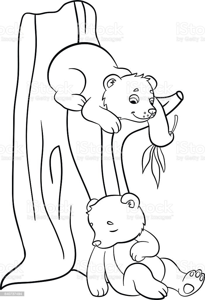 Coloring Pages Wild Animals Two Little Cute Baby Bears Royalty Free