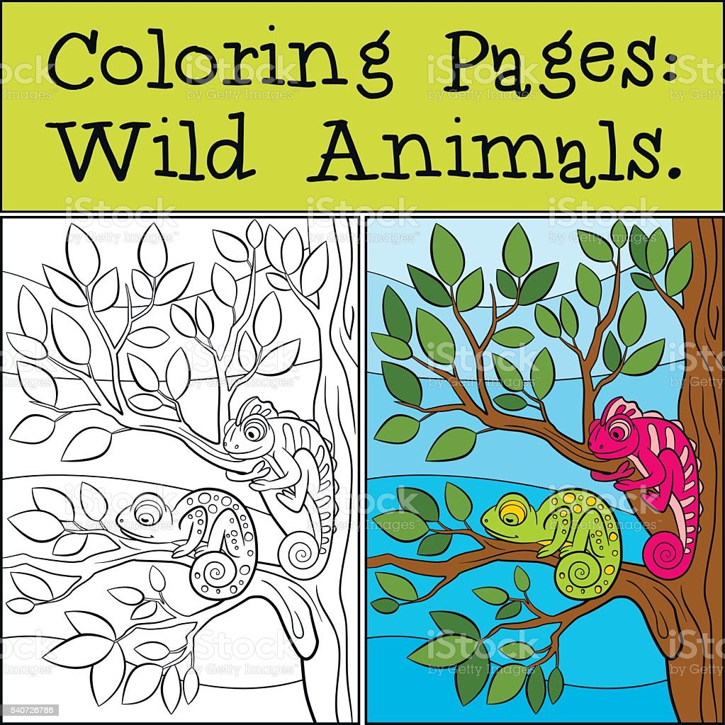 Coloring Pages Wild Animals Two Little Cute Chameleons stock vector ...