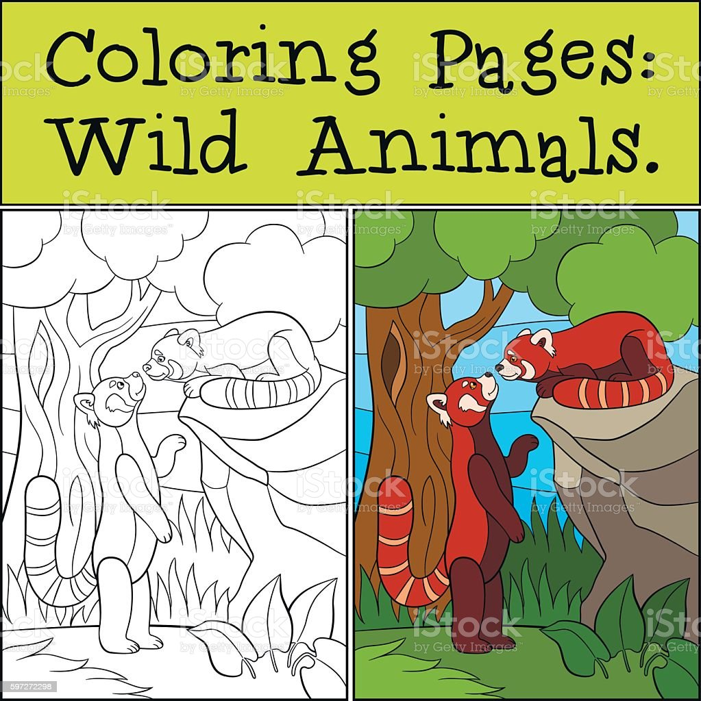 Coloring Pages: Wild Animals. Two little cute red pandas. royalty-free coloring pages wild animals two little cute red pandas stock vector art & more images of activity