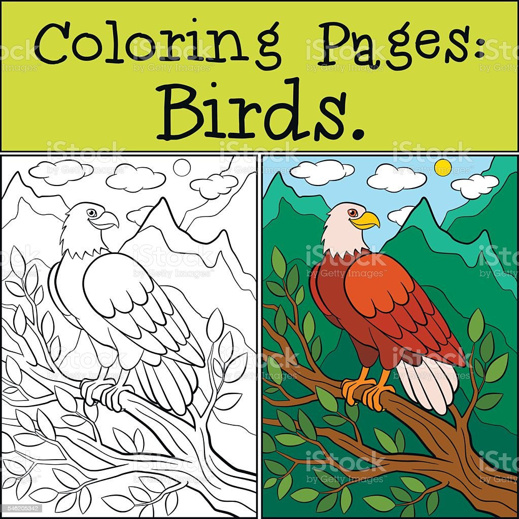 Coloring Pages Wild Birds Cute Bold Eagle Sits And Smiles Stock ...