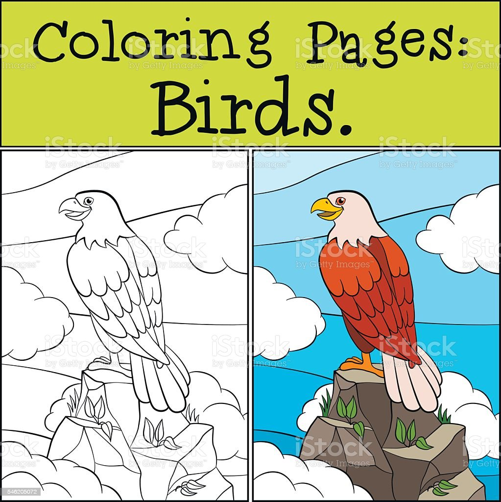 Coloring Pages Wild Birds Cute Bold Eagle Stock Vektor Art Und Mehr
