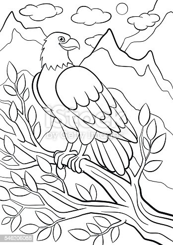 coloring pages wild birds cute eagle on the tree branch お絵かきの