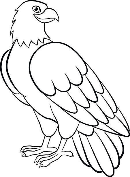 Cartoon Of A Bald Eagle Outline Illustrations, Royalty-Free