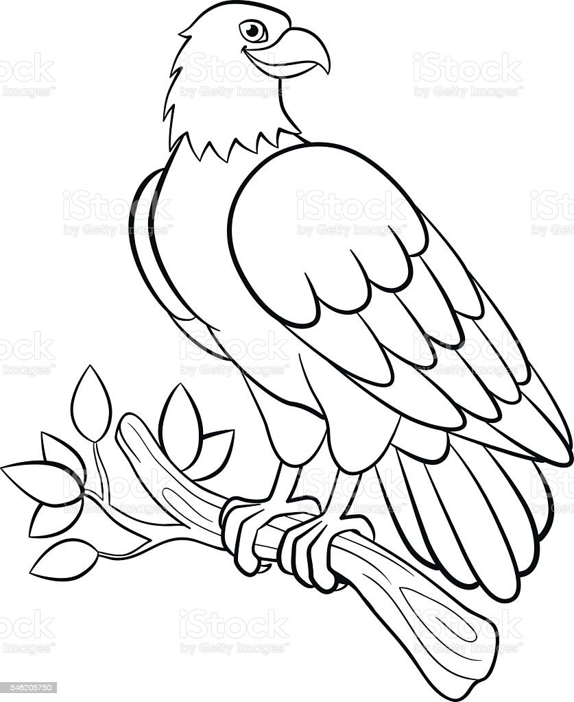 - Coloring Pages Wild Birds Cute Smiling Eagle Stock Illustration