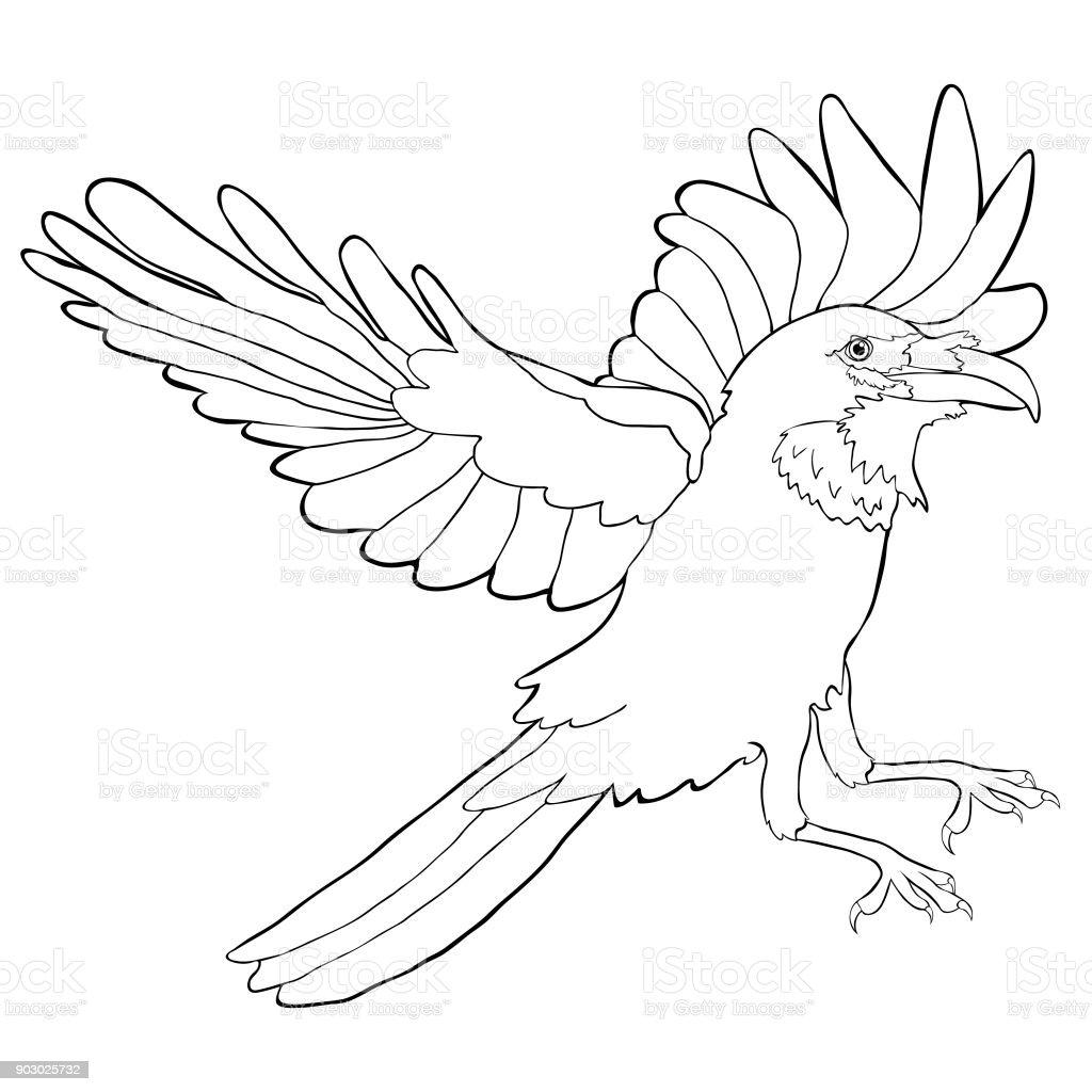 Coloriage oiseau corbeau aux ailes doiseau illustration vectorielle vecteurs libres de droits et - Coloriage corbeau ...
