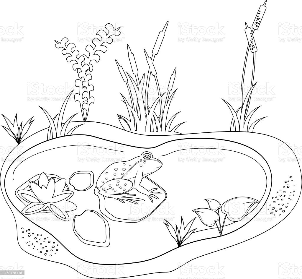 Coloring With A Frog And Pond Stock Illustration - Download ...