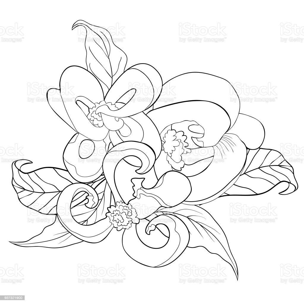 Ilustración de Para Colorear Con Ilustración De Vector De Florida ...