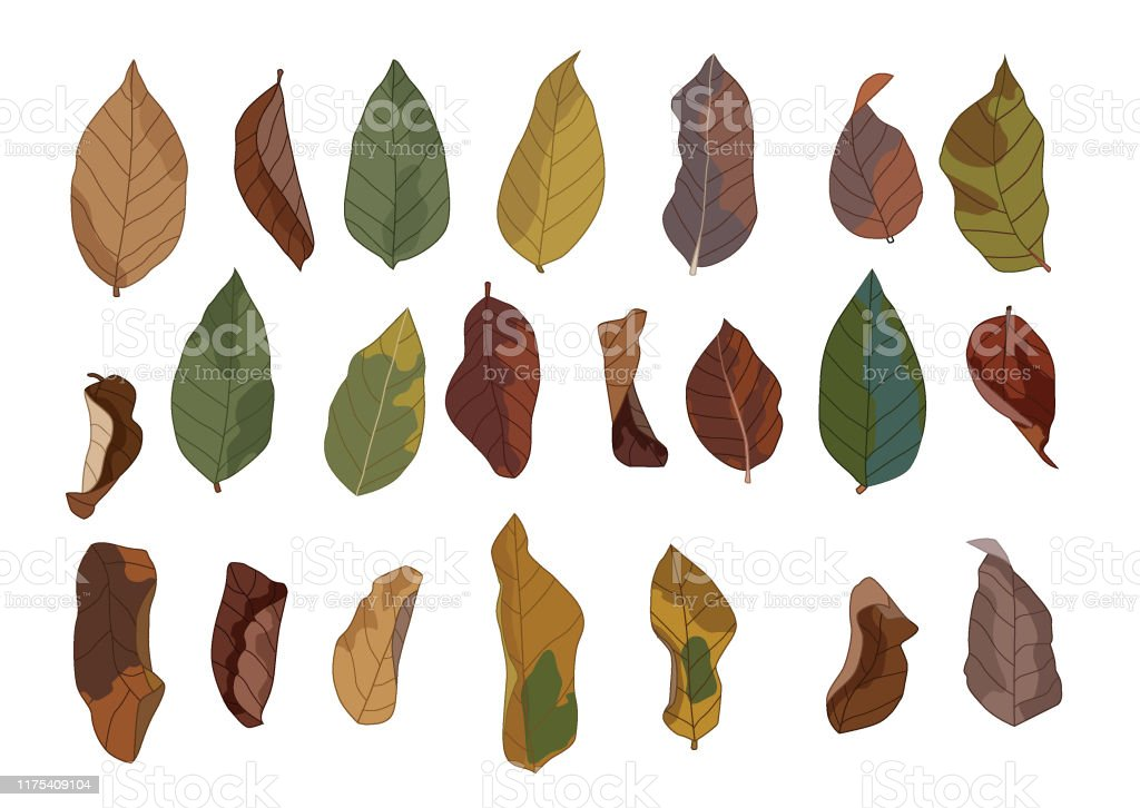 Beyaz Arka Plan Illustrasyon Vektoru Uzerinde Renkli Kahverengi
