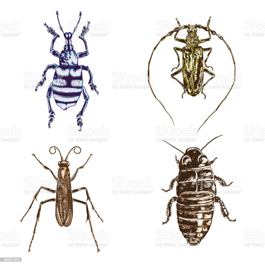 Colour Insect stipple drawing set isolated. Insects and bugs collection in trendy embroidery stippling and hatching, shading style. Vector. vector art illustration