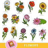 Colour set of flowers, collection of nature items with names in English. Cartoon visual dictionary for children about plants