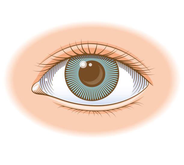 coloured eye illustration - глаз человека stock illustrations