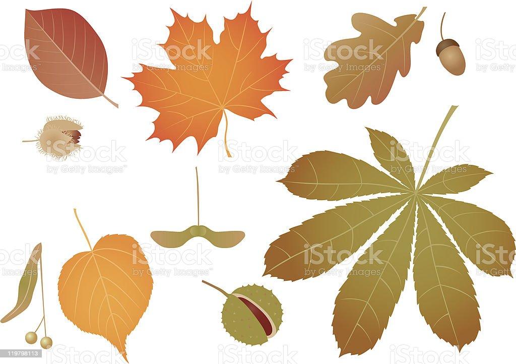 Coloured leaves vector art illustration