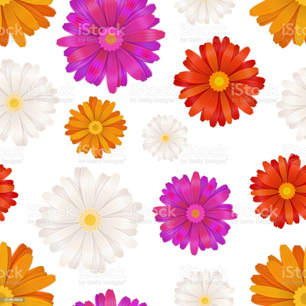 Colourful gerbera flowers isolated on white, seamless pattern vector art illustration
