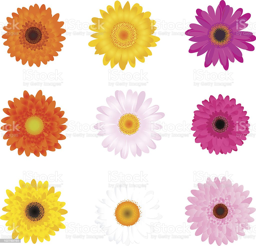 Colourful Gerbers Set vector art illustration