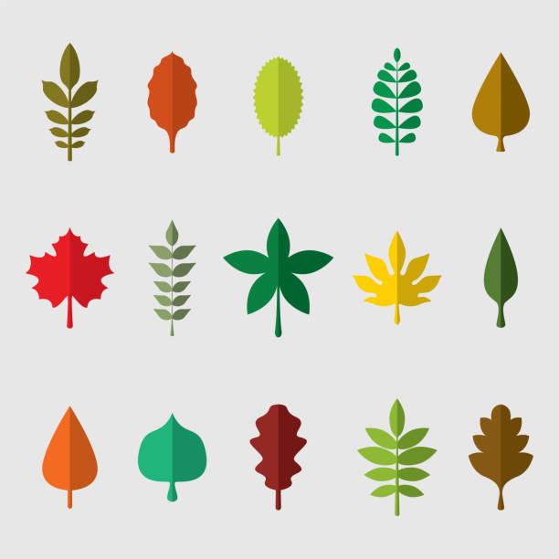Ensemble coloré d'illustration de vecteur de feuilles - Illustration vectorielle