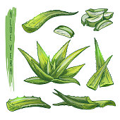 Colourful set of aloe vera elements. Vector silhouettes of botanical plant.
